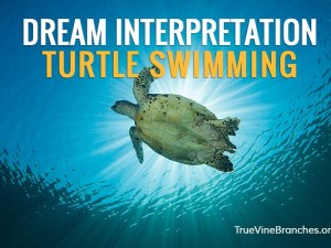 Dream Interpretation Example – Turtle