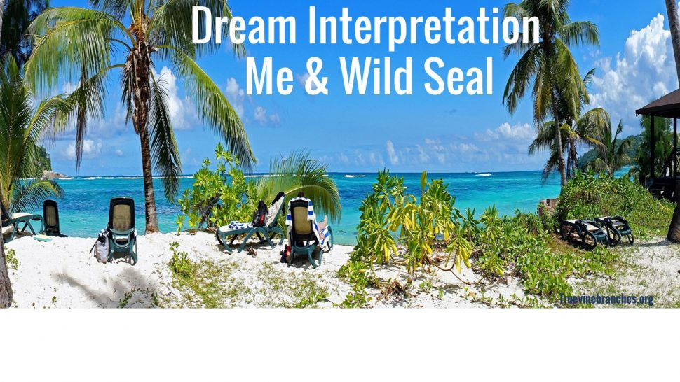 Dream interpretation Me & wild seal
