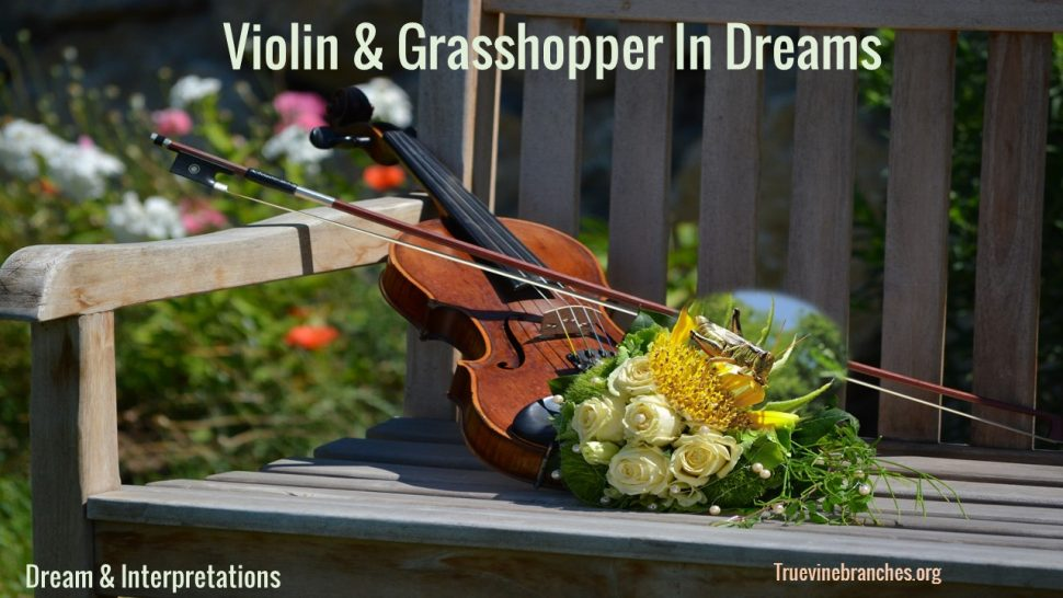 Violin and Grasshopper in dreams